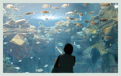 Heraklion Car Rental, Cretaquarium